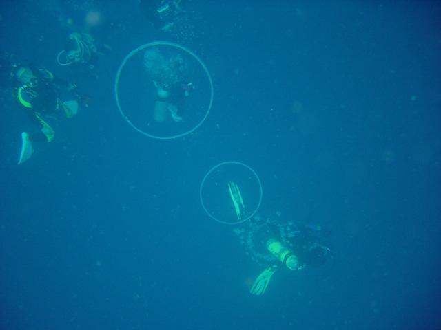 ダイバーのバブルリング